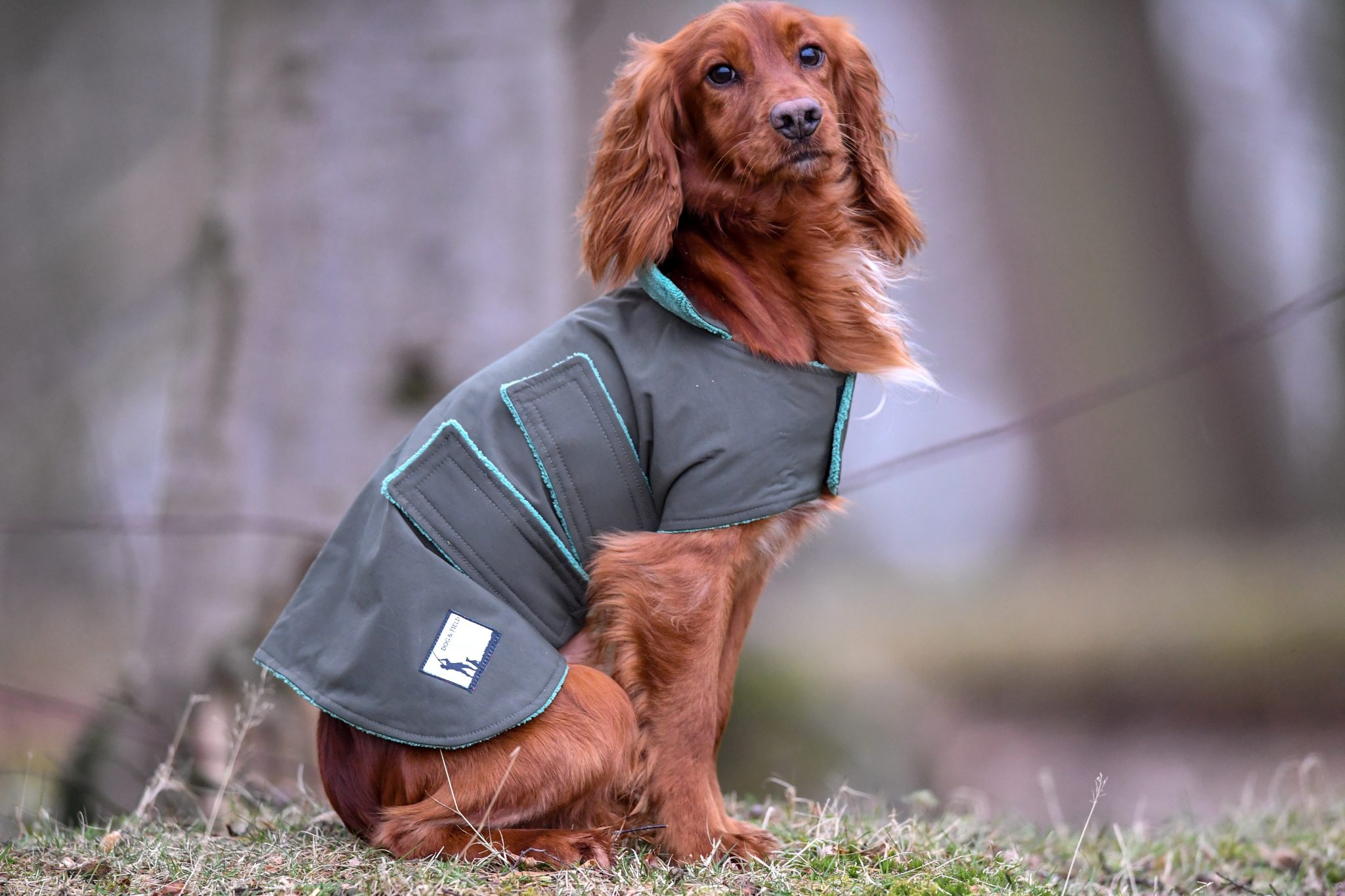 Dog and Field Waterproof Coat
